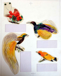 Four Birds of Paradise (Original) by Bernard Long