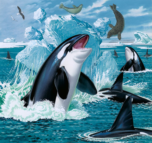 Books About Orcas For Kids