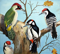 Four Woodpeckers (Original)